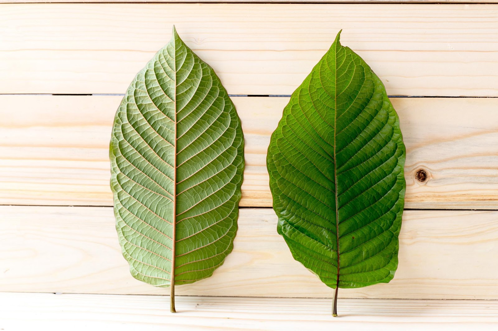 Tired Of Eliminating Kratom Extract